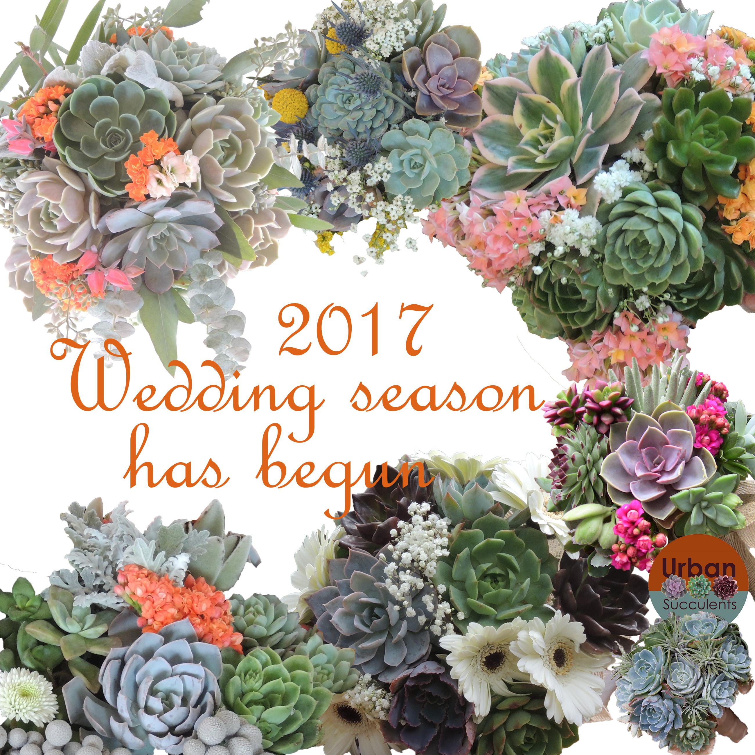 2017 wedding season-A