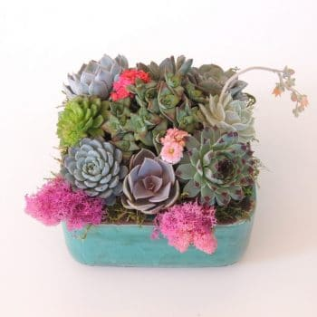Sedona Colored Ceramic Succulent Arrangement