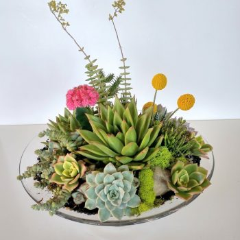 Succulent Dish Garden With Aloes and Cactus