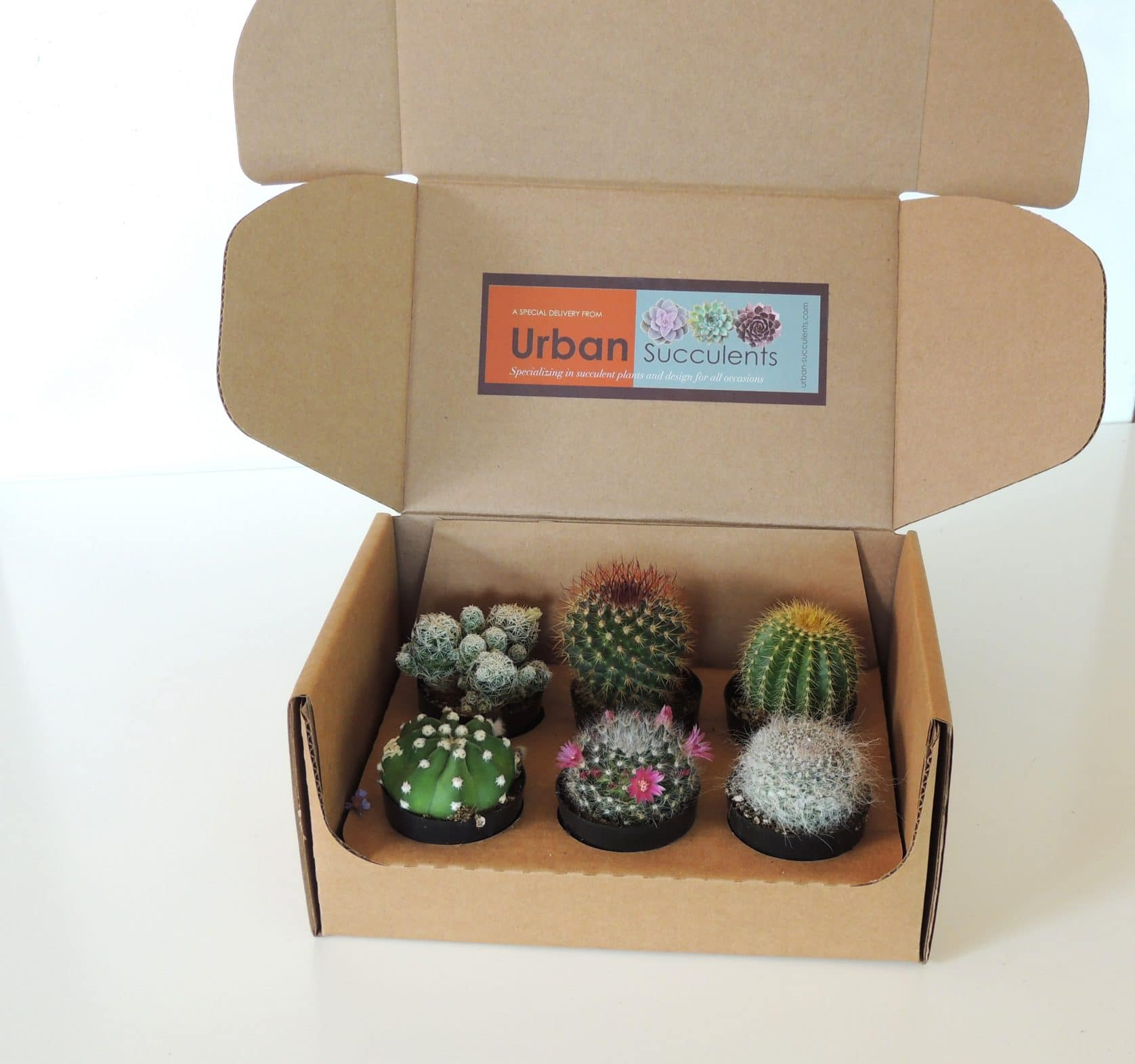Cactus Gift Box Urban Succulents