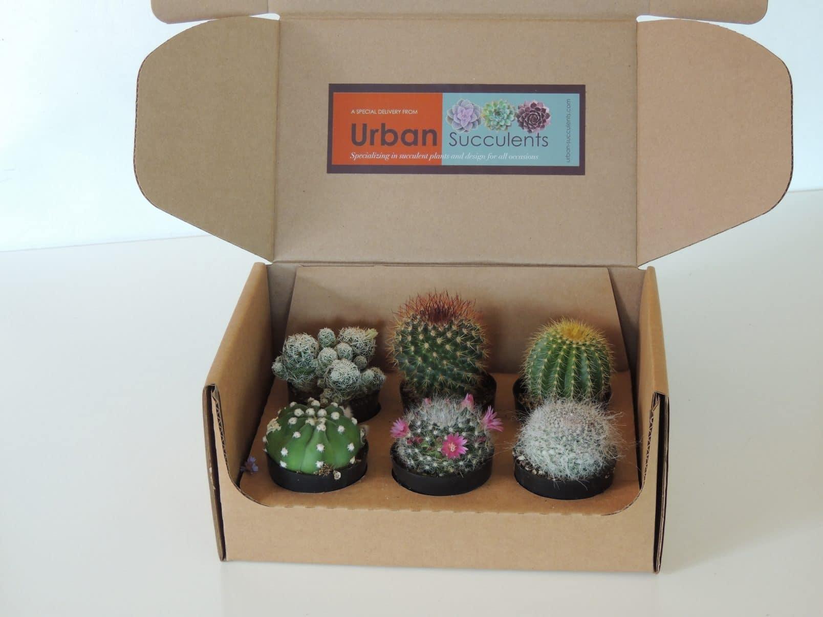 Succulent Planter Diy Cactus Gift Box Urban Succulents