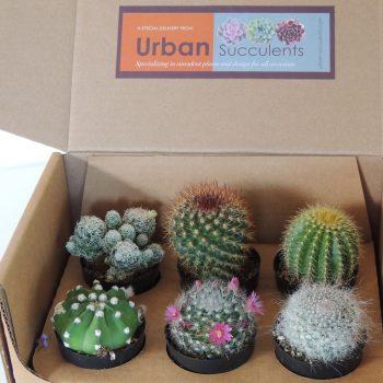 cactus-box-5598