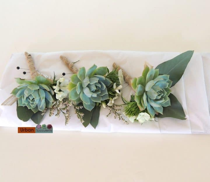 Succulent boutonnieres with eucalyptus leaves