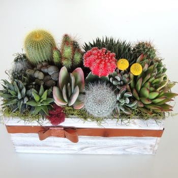 Indoor Succulent Arrangement
