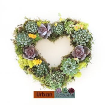 Heart Shaped Succulent Wreath - Includes Shipping