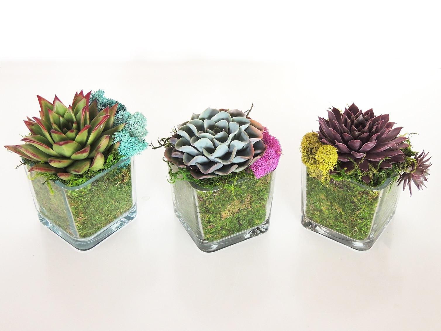 Succulent In Glass Vase Urban Succulents