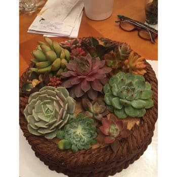 Succulent Cake Topper Products | Urban Succulents