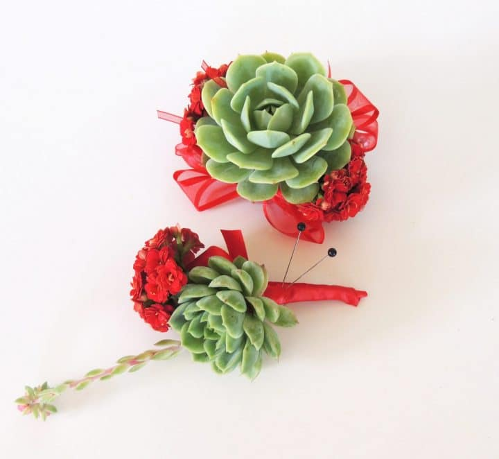 succulent corsage red
