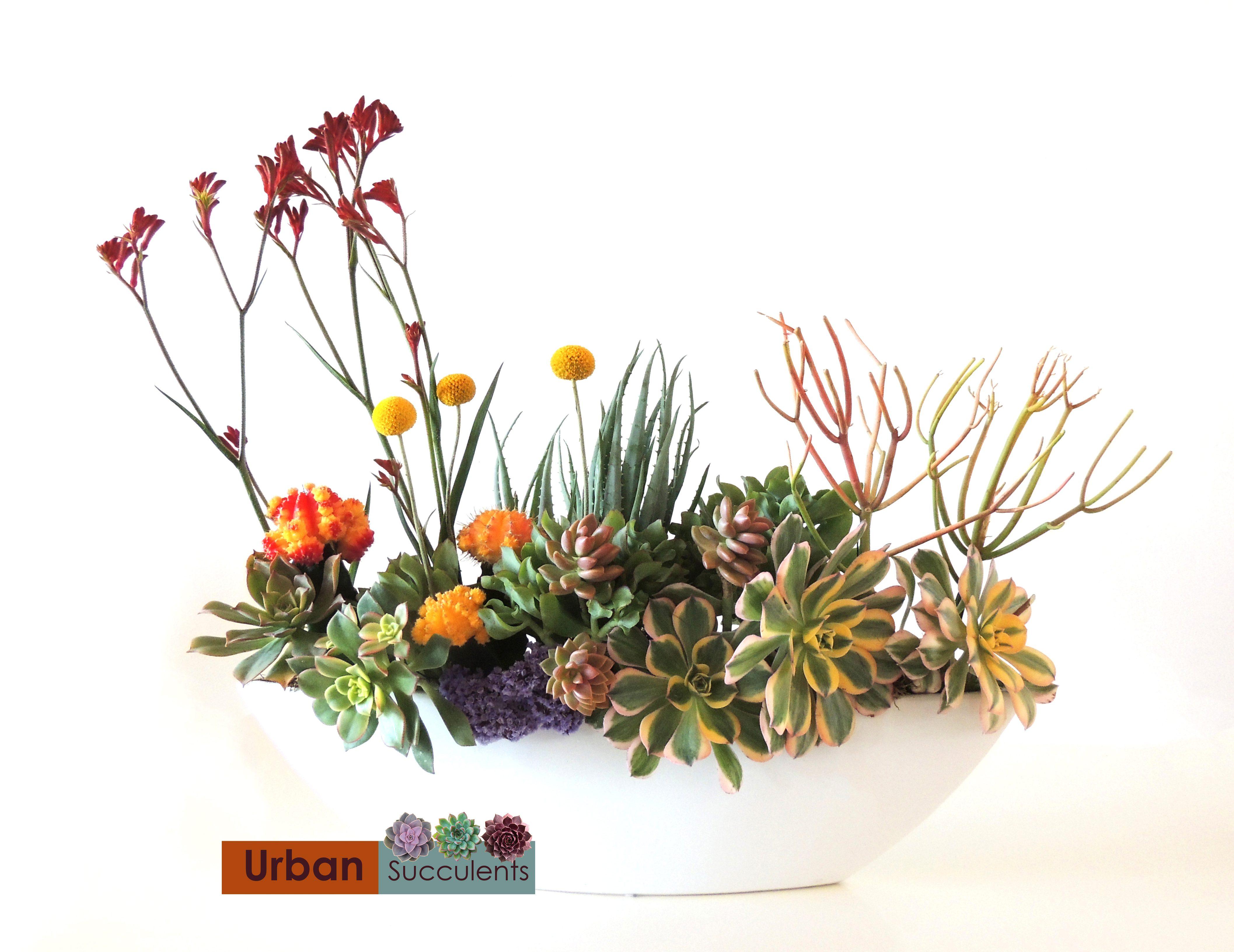 Succulent Bouquet, Succulent Centerpieces & More | Gallery