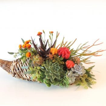 Succulent Cornucopia Centerpiece- Thanksgiving