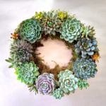 Succulent wreath gift