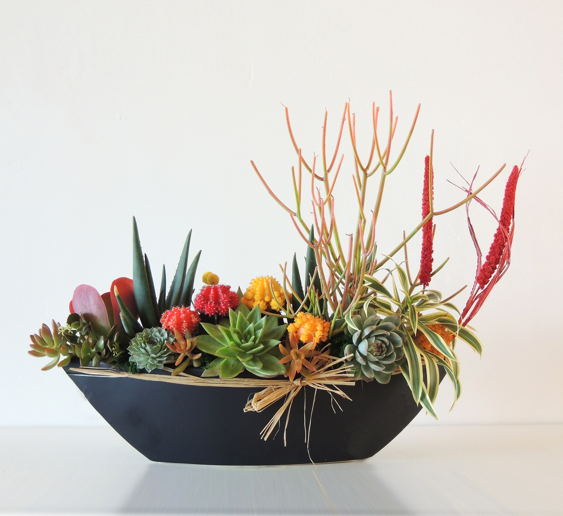 succulent arrangement aloes