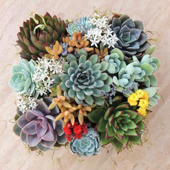 Succulent Garden in Ceramic Box