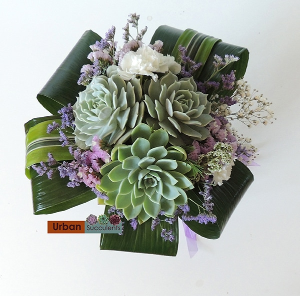Succulents and aspidistra leaves