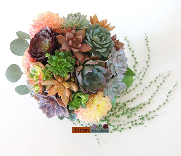 Susucculenst and strings of pearls