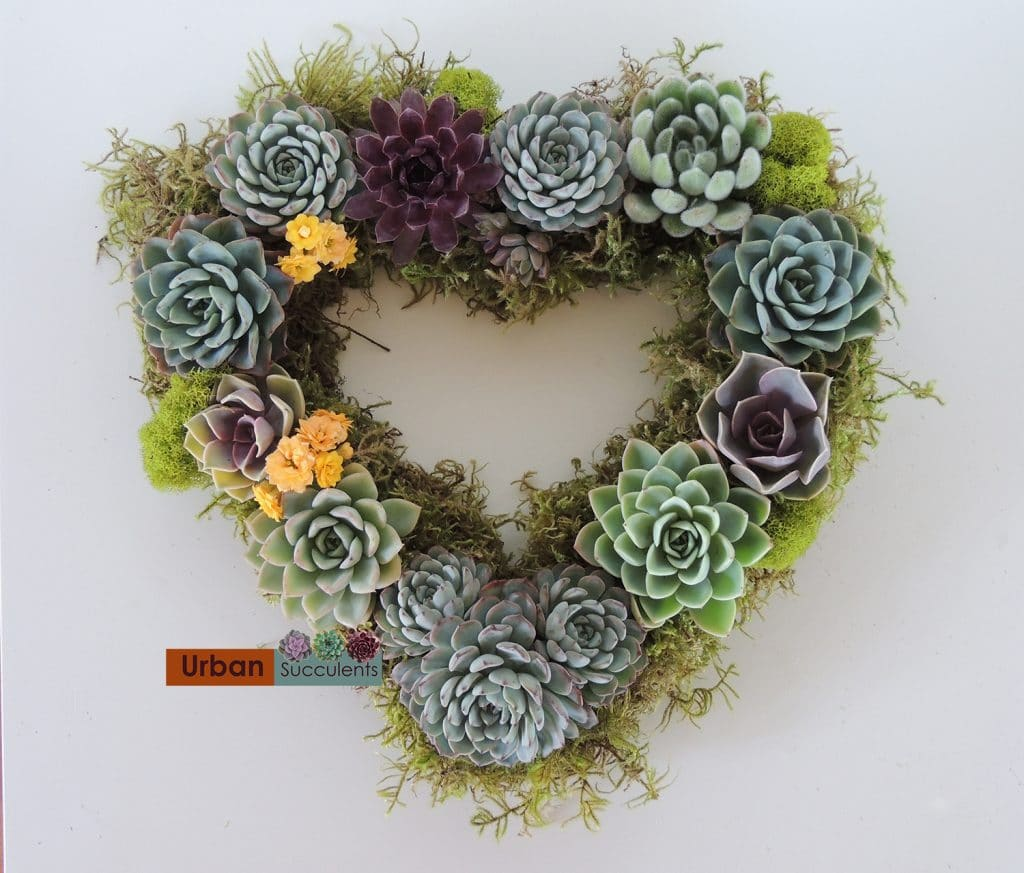 heart shape succulent wreath