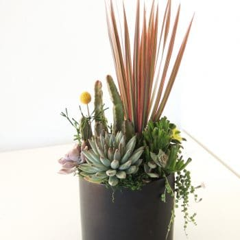 Dracaena Plant and Succulents