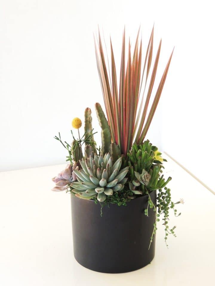 Dracaena and succulents arrangement