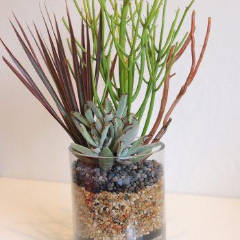 Terrarium-Style Plant Arrangement San Diego Delivery/Pick Up Only.