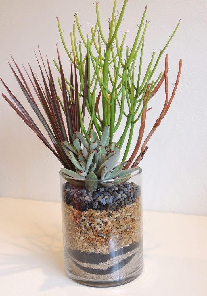 Terrarium-style succulent plant arrangement.
