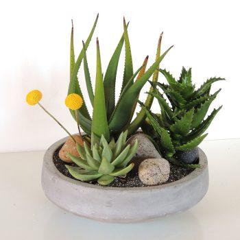 Contemporary Plant Arrangement
