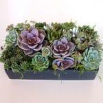 Pele-von Nurnberg arrangement in ceramic container