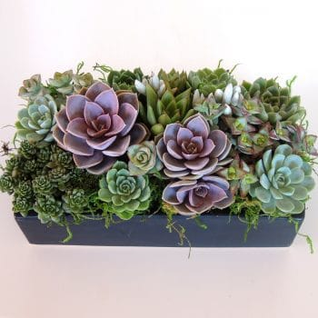 Succulent-arrangement-centerpiece in ceramic container.