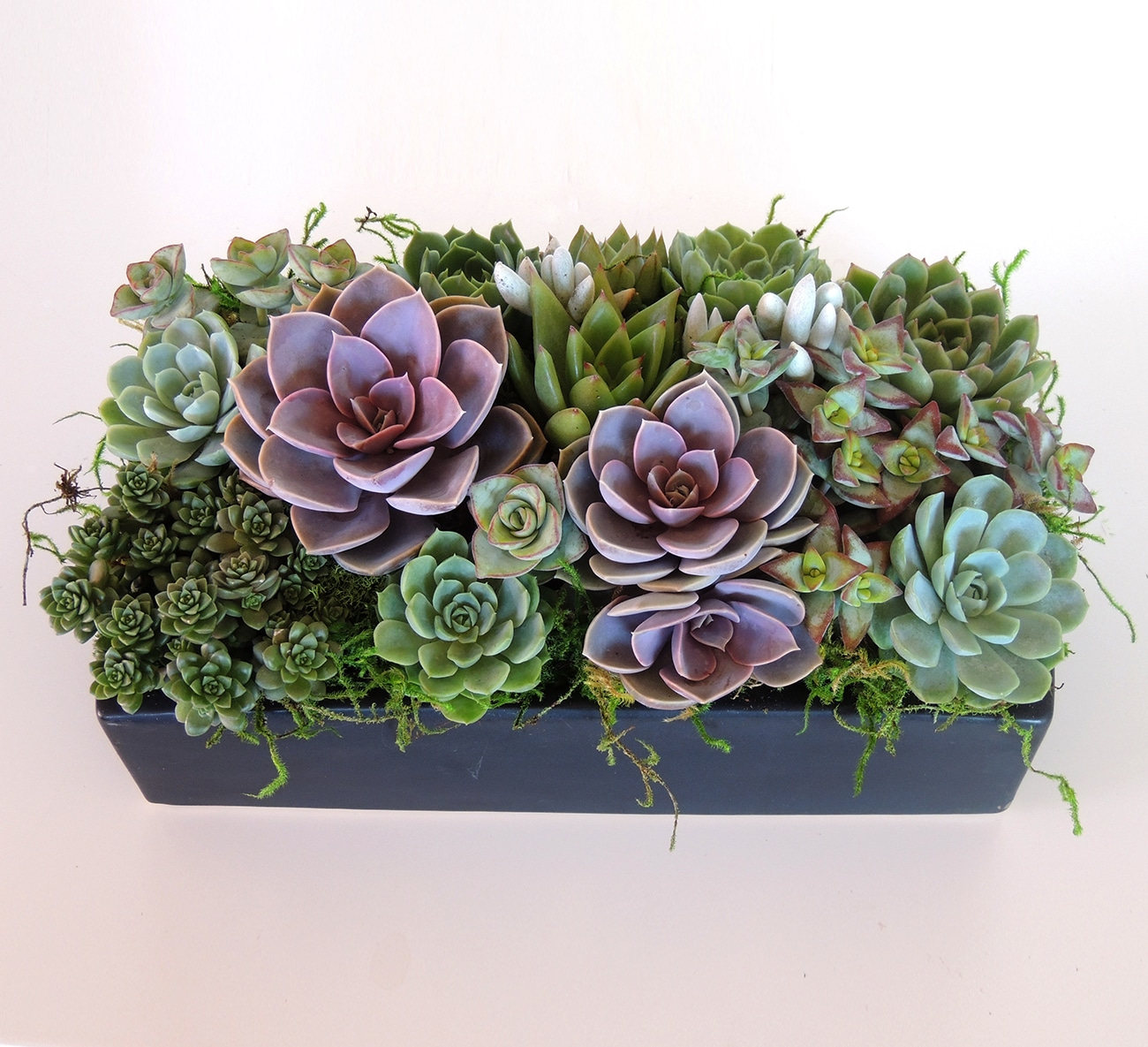 Pele-von Nurnberg arrangement in ceramic container
