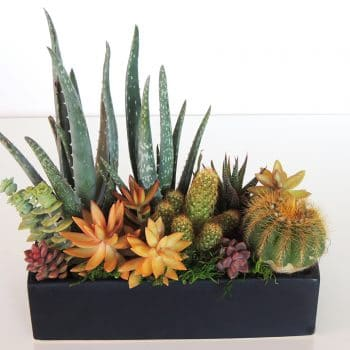 Succulents Dish Garden with Aloes San Diego Delivery/Pick Up Only.