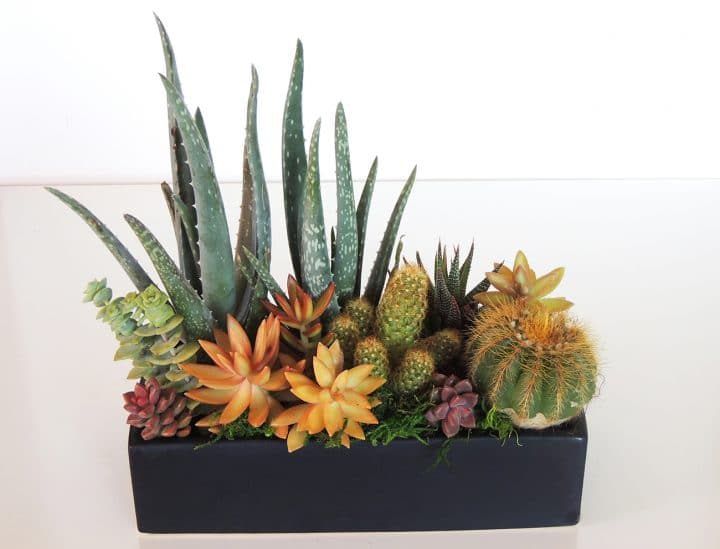 Succulent dish garden with orange.