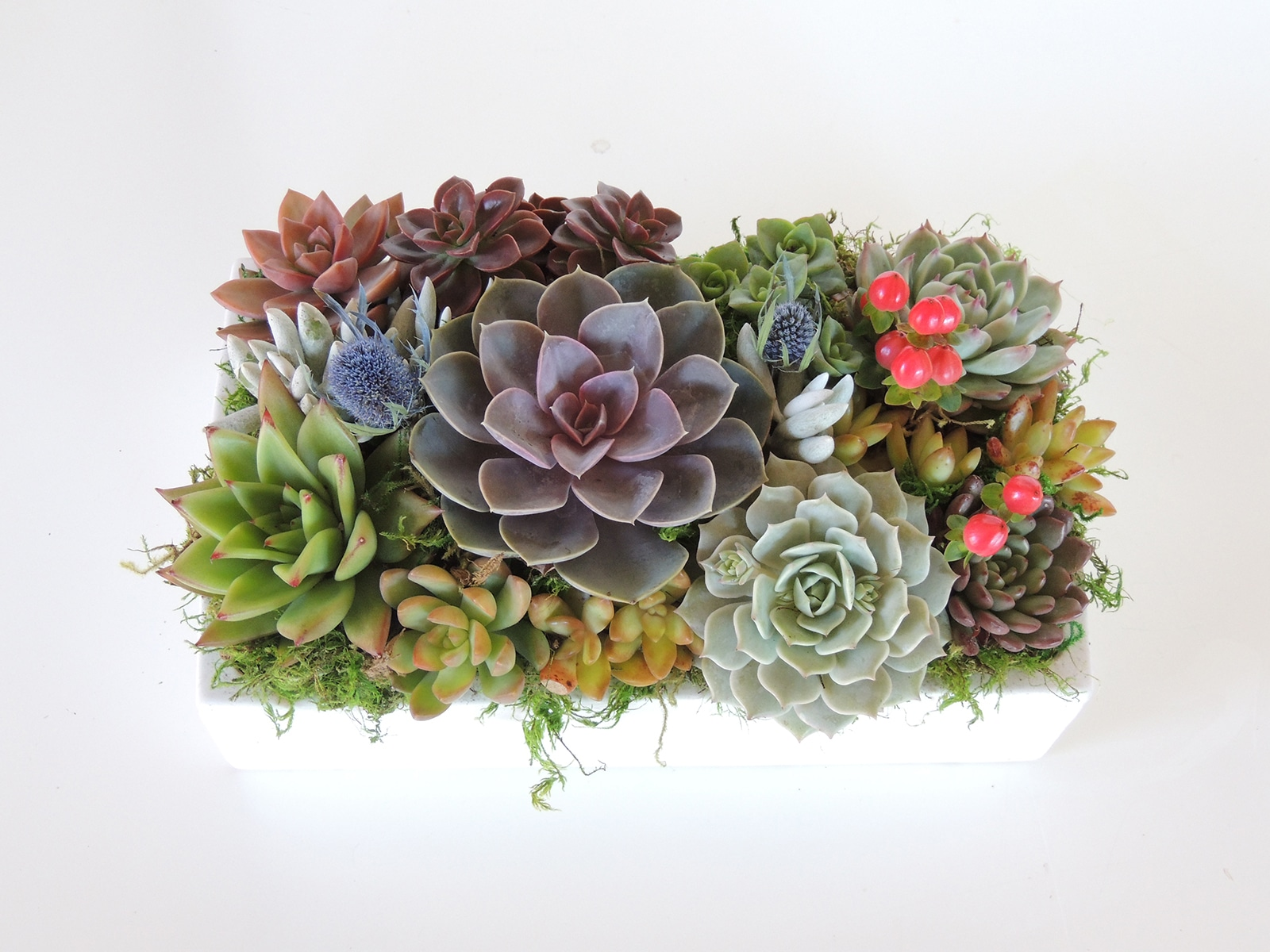 Succulent Arrangement Centerpiece In Ceramic Container Urban Succulents