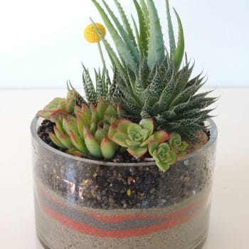 Succulents and Aloes in Galss Cylinder