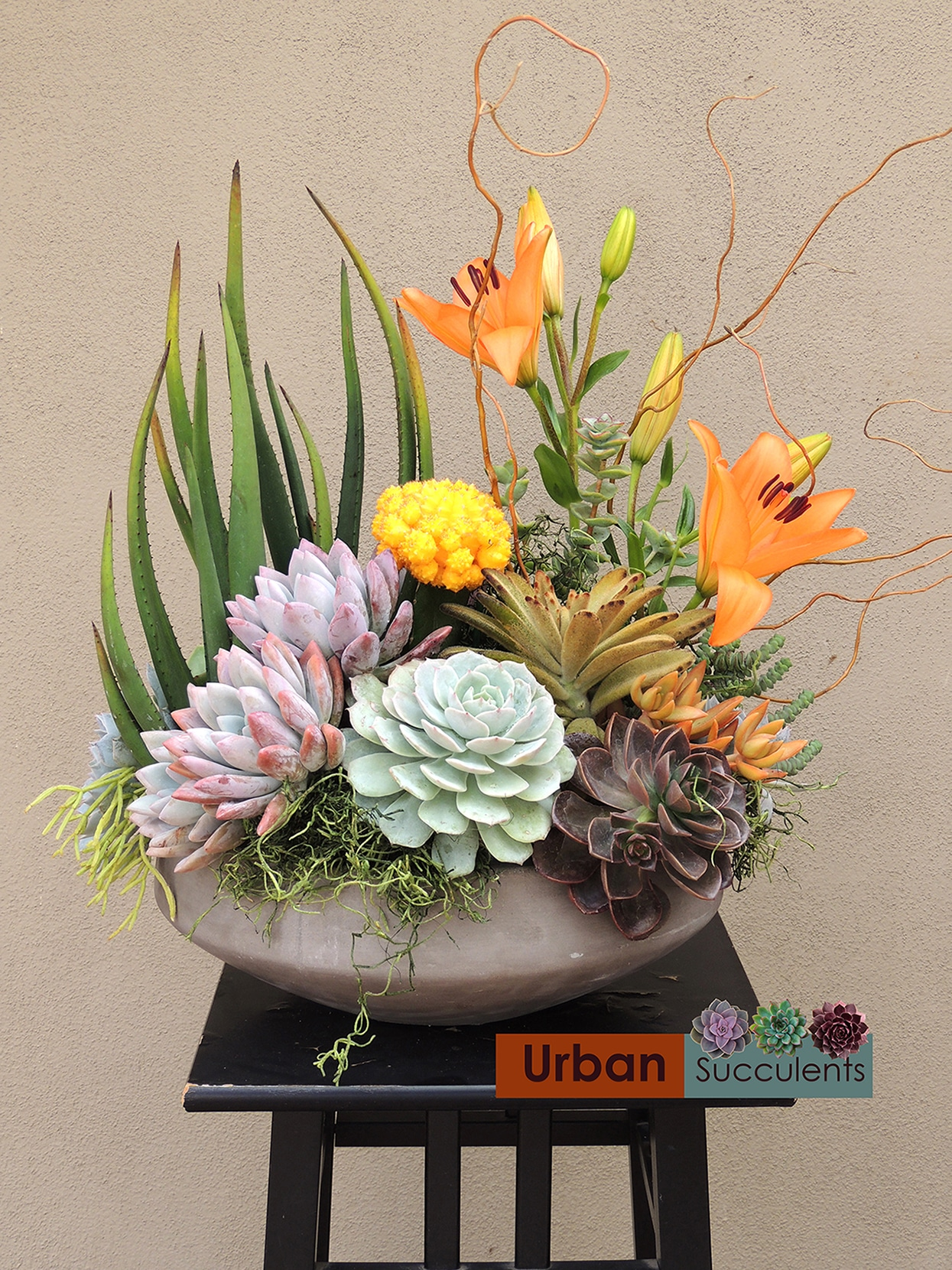 Designer S Choice Special Occasion Gift Urban Succulents