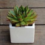 Succulent in cube